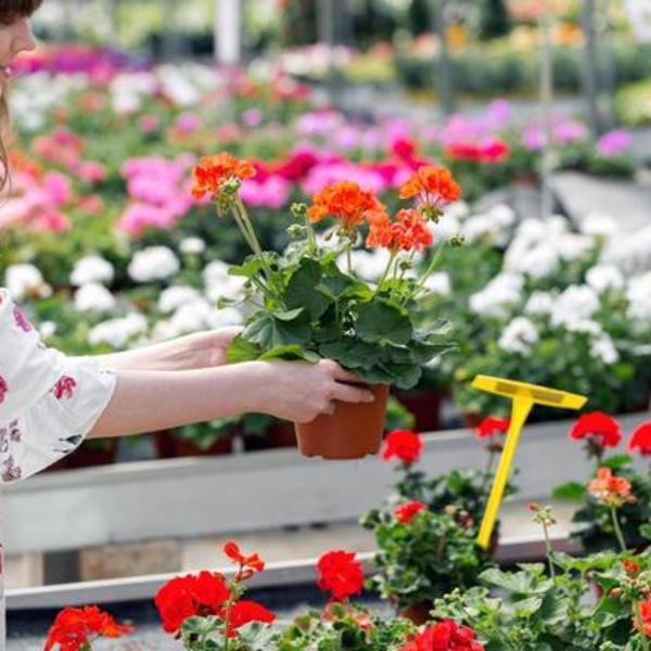 Ulepšavaju životni prostor i ugrožavaju vaše zdravlje: Sobne biljke koje izazivaju slepilo, opadanje kose, ošetećenje bubrega (FOTO)