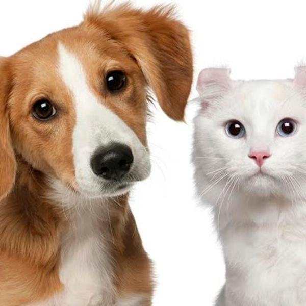 Lakše češljanje ljubimaca: Rešenje za zamršenu dlaku pasa i mačaka zove se True Touch!