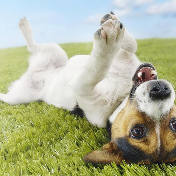 Pedikir za pse i mačke: Sredite svom ljubimcu šapice bez bola i bez stresa!